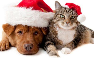 Hospedagem Natal e Ano Novo !!!