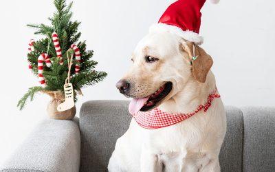 Hospedagem de Natal e Ano Novo